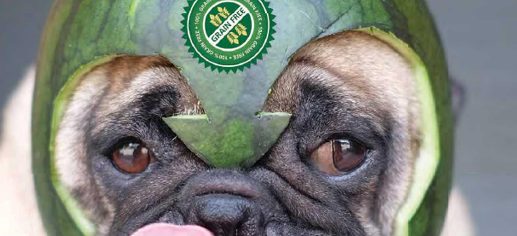 無穀認證的狗照片