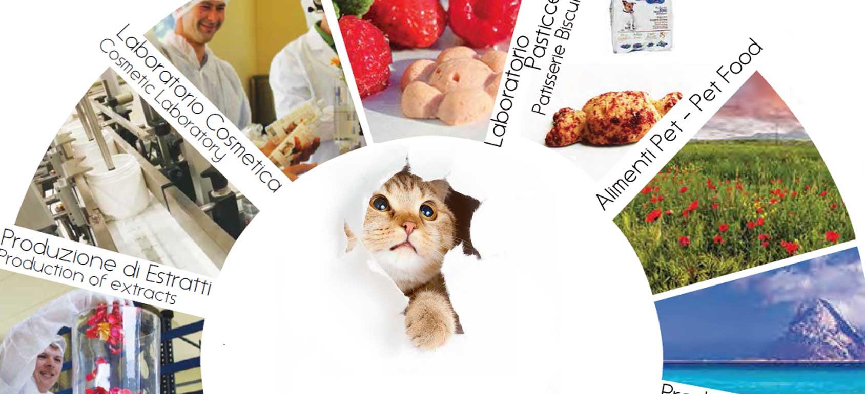dalla_gatto banner 圖片